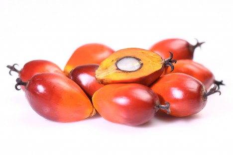 (c) Fotolia / A group of oil palm fruits on the white background